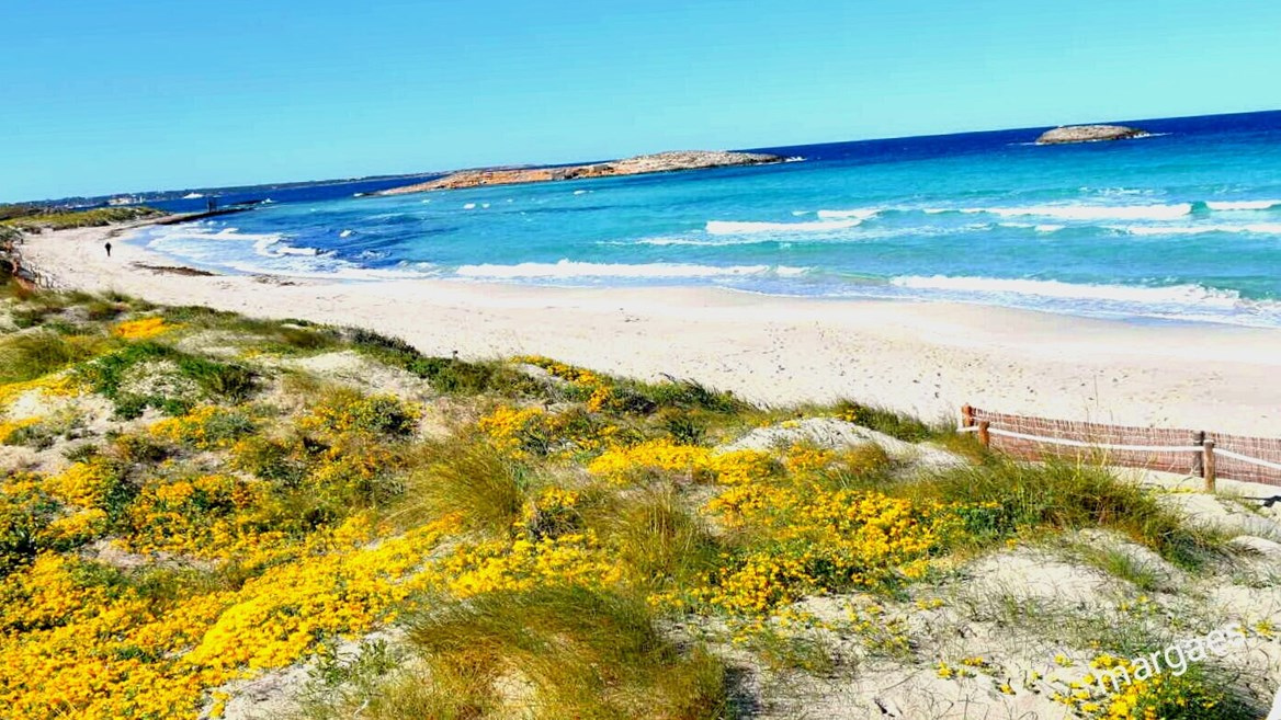 A sand spit that seems to split the sea into two is just one of the attractions of Ses Illetes, north of Formentera