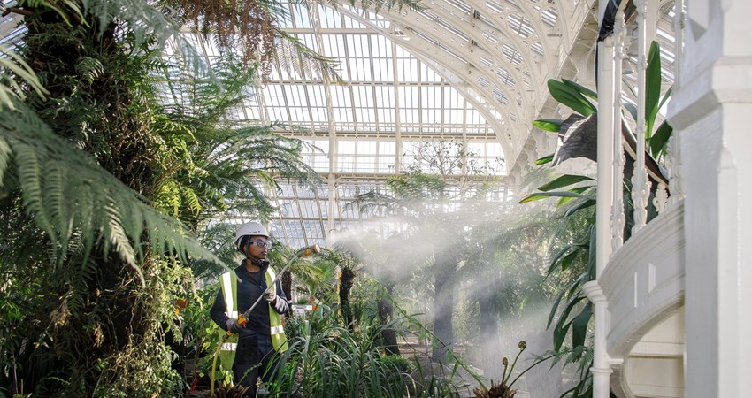 On May 5, the iconic Temperate House will reopen to the public